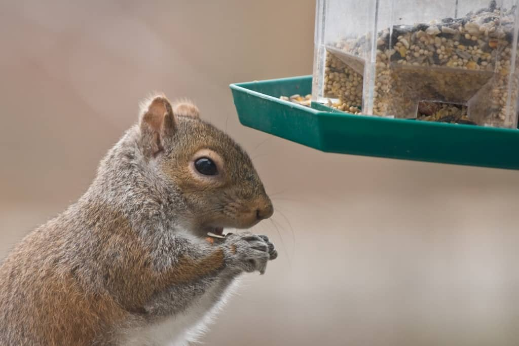 buying guide for squirrel feed