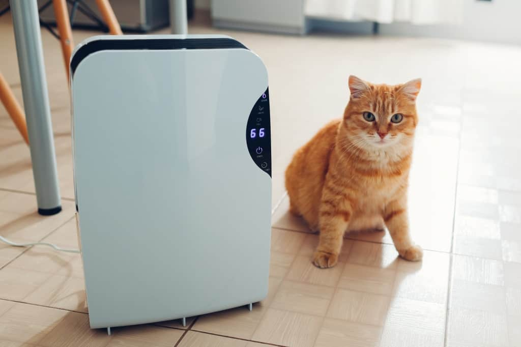 cat next to a dehumidifier.jpg