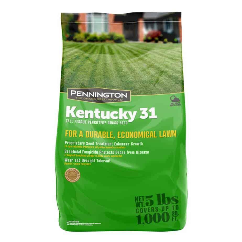 Kentucky 31 Tall Fescue Grass Seed