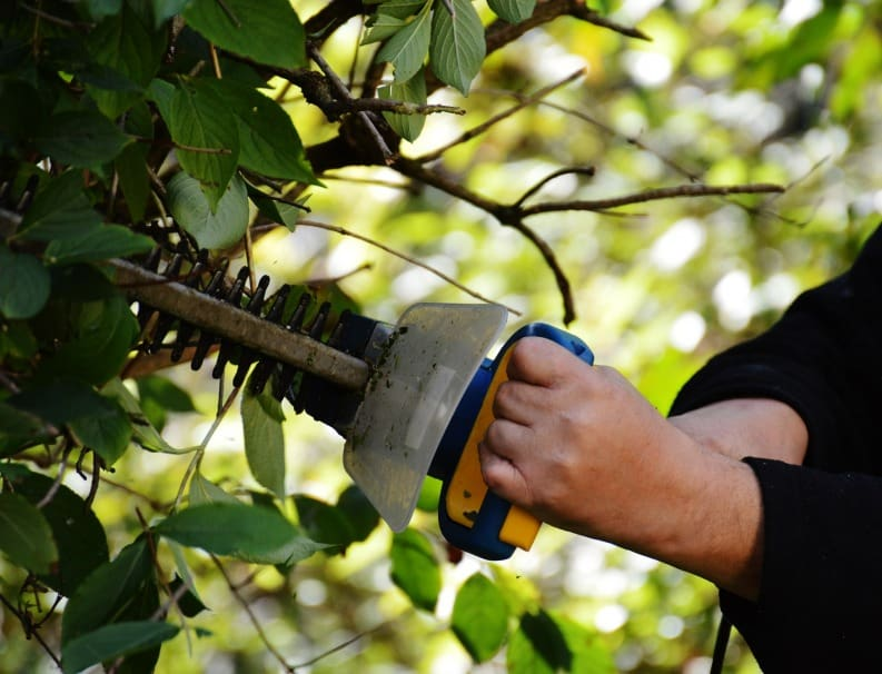 Top 5 Hedge Trimmers